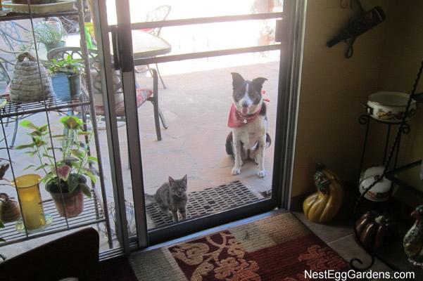 2013-09-12 kitten 001_1