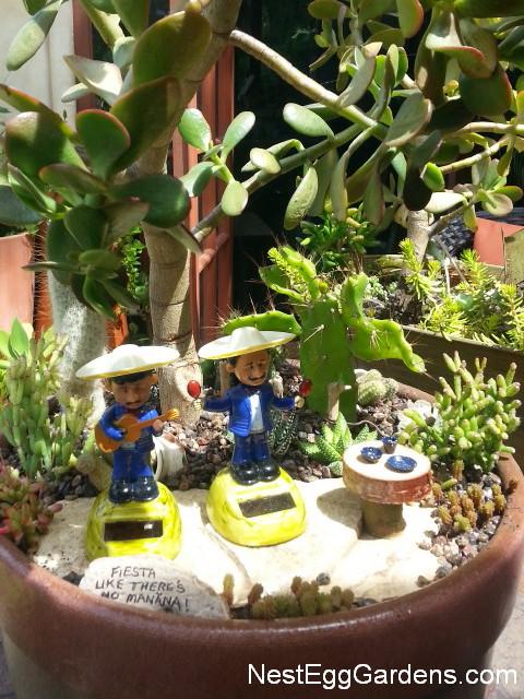 Cactus | Nest Egg Gardens