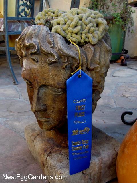 Blue ribbon winners | Nest Egg Gardens